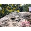 E109RC - CIRKÓNIA köves rozé arany Eljegyzési Gyűrű